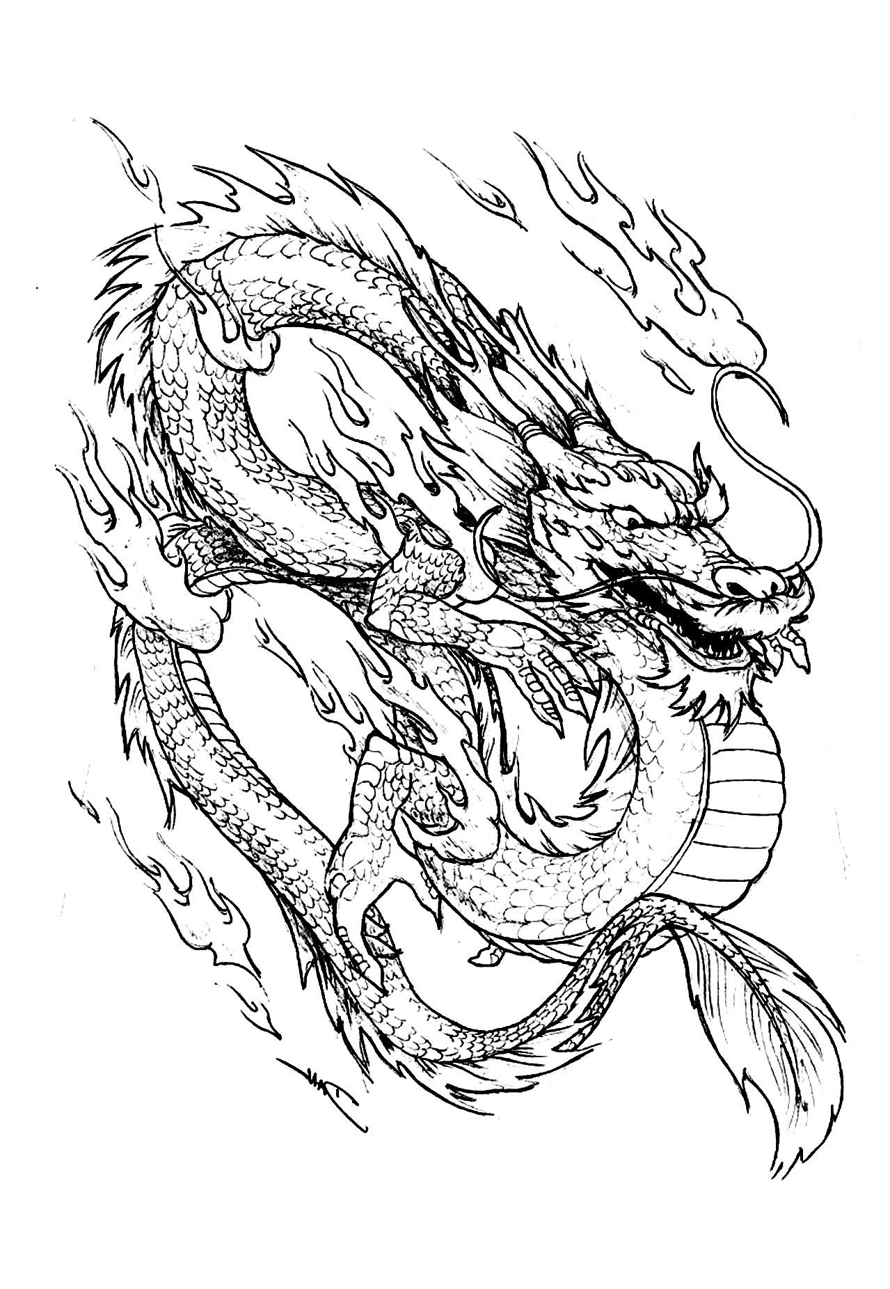 Similiar Komodo Dragon Coloring Pages Realistic Keywords